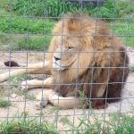 صورة فوتوغرافية لـ Wisconsin Big Cat Rescue
