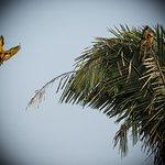 Photo of Chuncho Macaw Clay Lick