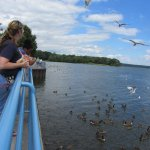 Pymatuning Spillway visitors prepare to launch bread to waiting wildlife.