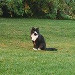 Resident farm cat