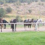 Photo de Moose Creek Ranch