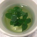 Fresh mint from the herb garden