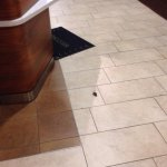 Mice in lobby were the food is served