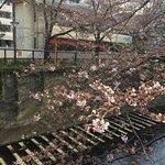 Meguro canal (near hotel)