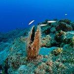 Photo de Pelagos Dive Centre
