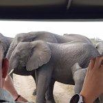 Tembe Elephant Park Accommodation Foto