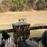 Photo of Mfuwe Lodge - The Bushcamp Company