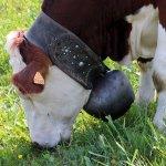 Vive les cloches de vaches.....