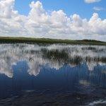 De mooie natuur van de everglades maakt deze boottrip al de moeite waard.