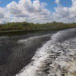 Met een hoop lawaai en snelheid door de everglades varen.Dit is een ervaring.