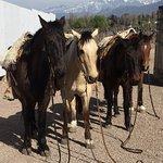 Foto de Bodegas Nieto Senetiner