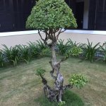 Lovely bonsai trees.