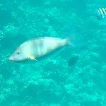 Foto di Seascope Submarine