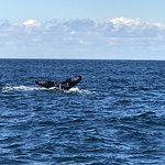 Photo de Granite State Whale Watch