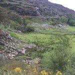 Photo of Kissane Sheep Farm