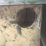 Turtle Hatchery Hikkaduwa Foto