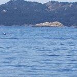 Foto de Puget Sound Express - Day Trips