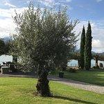 Olivenbaum sorgt für Ferienstimmung