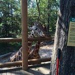 Photo of Birmingham Zoo