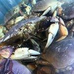 Dungenes Crab