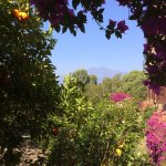 View of Mt. Etna from the gardens
