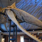 whale jaw