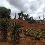 Photo de Botanicactus