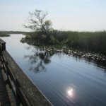 Reflections from the Marsh Boardwalk