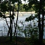Cormorants in the creeks