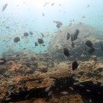 Foto di Aqua Vision Scuba Diving