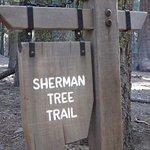 Photo de General Sherman Tree
