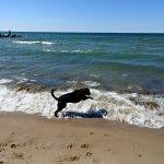 our dog meeting Lake Michigan