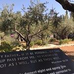 Foto de Garden of Gethsemane