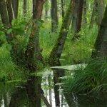 Urwald am See