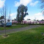 Lake Hamilton Motor Village & Caravan Park Photo