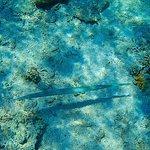 Trompit fish