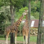 Fotografie: Zoo Plzeň
