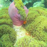 The Reef - rich, diverse, easy to access
