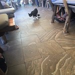 Cats in the restaurant.