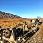 Photo of Svalbard Husky