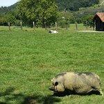 Este animal forma parte de la pequeña granja que hay en la Casa Rural