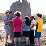 """Learn why """"magnetic termites"""" build their mounds in a N-S orientation."""
