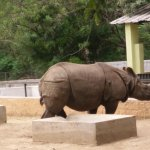 This particular rhino seemed a bit irritated and was looking dangerous