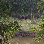 Photo of Jungle Safari Resort