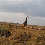 Фотография Nairobi Tented Camp
