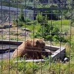 Kamloops Wildlife Park Picture