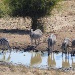 Photo de Ngoma Safari Lodge