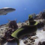 Photo de Palancar Reef