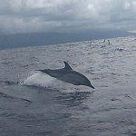 Foto de Whale'come ao Pico