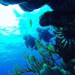 Photo of Bas Harts Diving Curacao